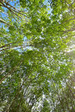 Under the shade of a tree Cover the sky Royalty Free Stock Photography