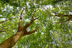 Under the shade of a tree Cover the sky Stock Image