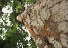 Under-sikten av trädtextur arkivbild