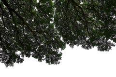 Under skuggan av den tropiska trädfilialen Royaltyfria Foton