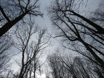 Under the sky in the deep dark forest. Stormy cloudy sky, as seen from below trees, from a unique perspective stock photo
