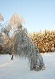 Under snow Stock Photography