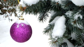 Under snow. Pink shiny ornament on natural trees under snow, video clip stock video footage