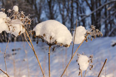 Under the snow Royalty Free Stock Photo