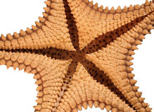 Under a Starfish. The underside of a starfish isolated on a white background Royalty Free Stock Photography