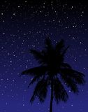 Under the stars. Editable vector illustration of a palm tree under the stars at night