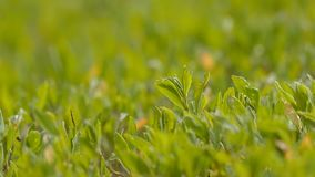 Under the sun green grass and leaves slow motion video stock video footage