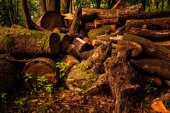 Pile of stumps in the woods Royalty Free Stock Photos