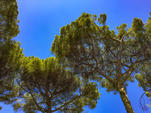 Under tall trees Stock Images