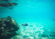 Free Under The Sea Underwater Blue Dive Island Stock Photography - 117686102
