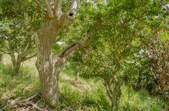 Under träd i skogsmark royaltyfri fotografi