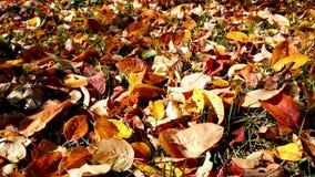 Under träden i höst Fotografering för Bildbyråer