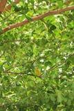 Under trädet arkivbild