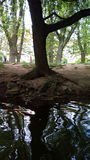 Under trädet arkivfoton