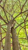 Under trädet Royaltyfria Bilder
