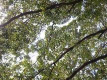 Under trädet och himlen av gräsplan Arkivbild
