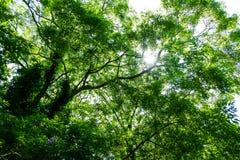 Under trädskuggan Royaltyfri Foto