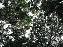 Under trädtexturen av sidor Arkivbild