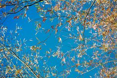 Under the tree. Bright blue sky through the branches Royalty Free Stock Images