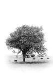 Under tree Royalty Free Stock Photography