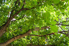 Under a tree Royalty Free Stock Photo