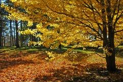 Under the Tree Stock Image