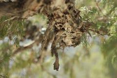 Under the Tree Royalty Free Stock Photo