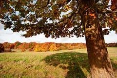 Under the tree Royalty Free Stock Photos