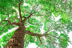 Under tree branch with green leaf view Stock Photo