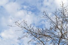 Under of tree and with branch magnify.  Stock Photos