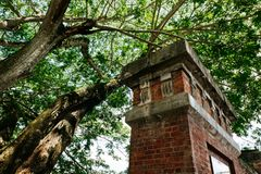 Under the tree canopy and abandon concrete structure Royalty Free Stock Photos