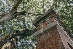 Under the tree canopy and abandon concrete structure Stock Photography