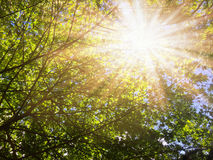 Under the tree flare light of sun. Royalty Free Stock Image