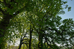 Under a tree in the forest Royalty Free Stock Photo