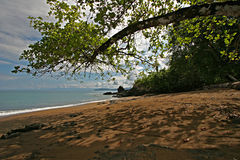 Under a tree on a tropical beach. Unspoiled and quite beach along the Pacific Ocean in Costa-Rica with thunderstorm clouds far on the horizon Royalty Free Stock Photos