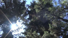 Under the Trees 1. Low angle view of the foliage of some big trees that hide part of the sky stock footage
