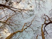 Under the trees Stock Photos