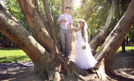 Under the trees. sunshine. Young newlyweds embracing in the park in the shadow of giant platan Stock Photography