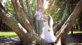 Under the trees. sunshine. Young newlyweds embracing in the park in the shadow of giant platan Stock Photos