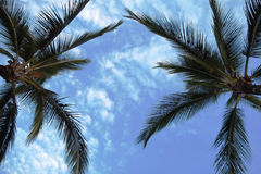Under Two Palms Royalty Free Stock Image