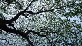 Under the umbrella of the big tree Stock Photos