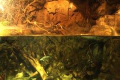 under vatten Royaltyfria Bilder