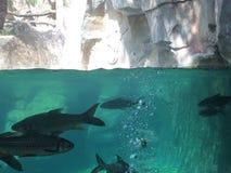 under vatten Royaltyfria Foton
