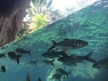 under vatten Arkivfoto