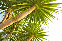 Under view of palm trees Stock Photo