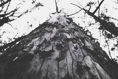 Under View Photography of Tree Trunk Stock Images