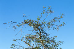 Under View of Tree Branches Against Blue Cloudy Sky Royalty Free Stock Photos