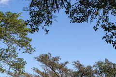 Under View of Tree Branches Against Blue Cloudy Sky Stock Photography