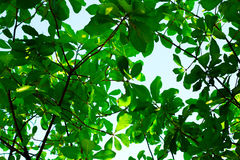 Under view of tree and clear sky Stock Images