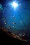 Under water. Chiang mai zoo aquarium,thailand Royalty Free Stock Photography